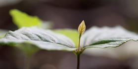 Incentivo ao Reflorestamento