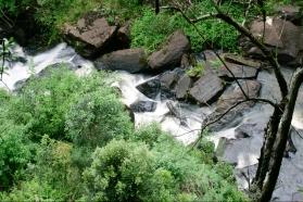 Pesquisa e Prote��o Florestal