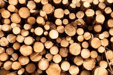 Imagem do case Wood Purchasing Policy