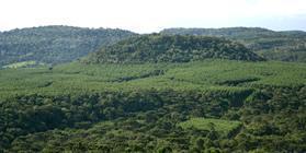Bosques plantados