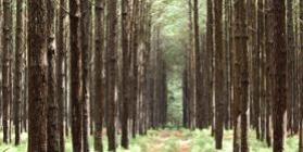 Florestal - RS